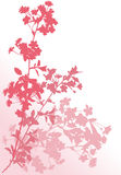 Tree pink cherry tree branches Stock Images