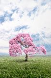 Tree of pink color Stock Image
