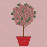 Tree with pink flowers in a flower pot Royalty Free Stock Photos