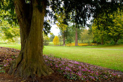 Tree and pink flowers Forde Abbey Dorset England Stock Photography