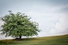Tree on the green field Stock Photos