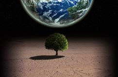 Tree and planet Stock Photos