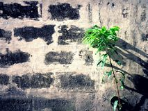 Tree plant and a concrete wall Royalty Free Stock Photography