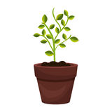 Tree plant cultivate icon. Vector illustration design Stock Images