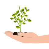 Tree plant cultivate icon. Vector illustration design Royalty Free Stock Photo
