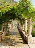 Tree, Plant, Flower, Garden Royalty Free Stock Photos