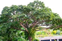 Tree plant in garden decorate park Stock Photos