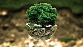 Tree, Plant, Grass, Houseplant royalty free stock photos