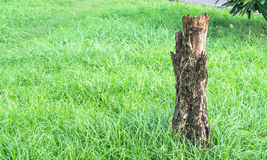 Tree plant on green field Stock Image
