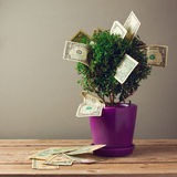 Tree plant with money on wooden table. Royalty Free Stock Photos