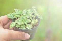 Tree plant Royalty Free Stock Image