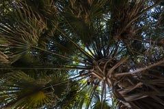 Tree, Plant, Vegetation, Woody Plant royalty free stock photography