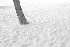 Tree plant and white sand beach Royalty Free Stock Image
