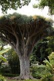 Tree, Plant, Woody Plant, Vegetation royalty free stock photography