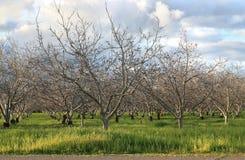 Tree Plantation Royalty Free Stock Photography
