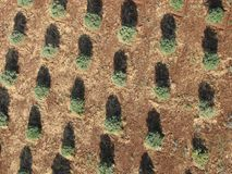 Tree plantation from top view stock photos