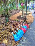 Tree planting ceremony. Brightly coloured water cans next to newly planted young nutmeg trees in preparation for the tree planting ceremony to commemorate the re Stock Photography