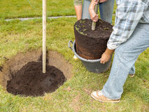 Tree planting Royalty Free Stock Image