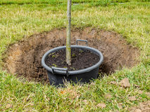 Tree planting Royalty Free Stock Photo