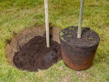 Tree planting Royalty Free Stock Photos