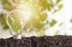 Tree planting and growth up. Stacked on light bulb with soil on green and soft light sunny background, concept in save World environment day reforesting eco Stock Photography