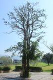 Tree. Stock Image