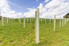 Tree Planting Royalty Free Stock Photos