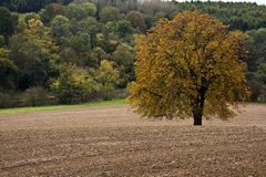 Tree in a ploughed field Royalty Free Stock Photo