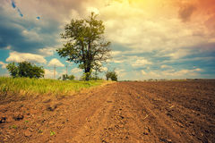 Tree on a plowed field. Arable field with dramatic cloudy sky and tree Royalty Free Stock Photography