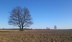 Tree on the plowed field Stock Photos