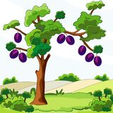 Tree with plums Stock Image