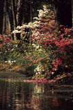 Tree pond. Trees stand on the side of this pond in the autumn months Stock Images