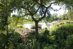 Tree with pond in the background. Tree with pond and landscaping Stock Photography