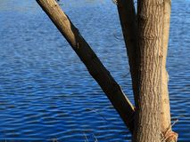 Lakeside Tree and Blue Water Stock Images