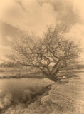 Tree by a Pond Royalty Free Stock Photography