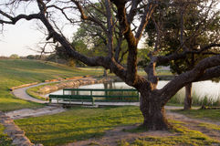 Tree and Pond. A quiet place near a Tree in front of a small pond. Shadows are formed as the sun begins to set Royalty Free Stock Photography