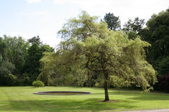 Tree by Pool. A tree by a pool in the grounds of Ashford Castle Cong Ireland royalty free stock photography