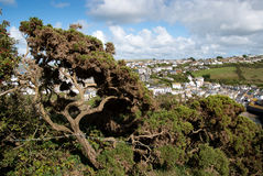 Tree in Port Isaac Royalty Free Stock Images