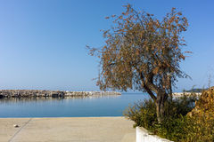 Tree at the port of Limenaria, Thassos island,  Greece Royalty Free Stock Photography
