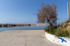 Tree at the port of Limenaria, Thassos island, Greece Royalty Free Stock Image