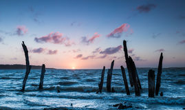 Tree Posts Sunset Stock Images