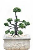 Tree on pot Stock Photos