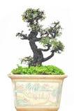 Tree on pot Stock Photo