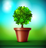 Tree in pot Royalty Free Stock Images