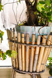 Tree pot Royalty Free Stock Images