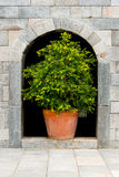 Tree in a pot Stock Image