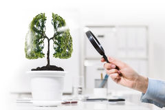 Tree in pot Royalty Free Stock Image
