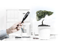Tree in pot Stock Images