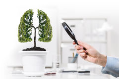 Tree in pot Stock Photography
