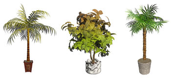 Tree in pot and green plant Royalty Free Stock Photos